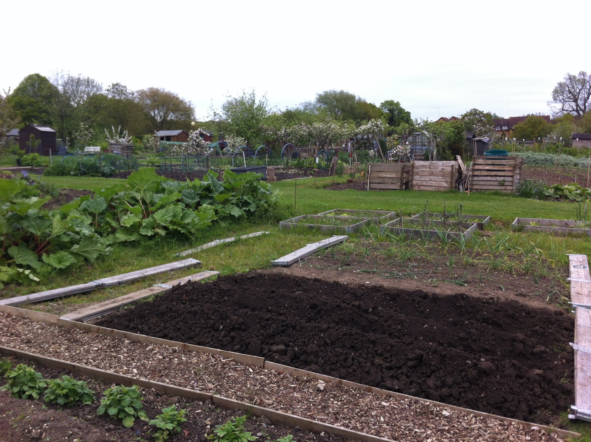 Allotment 2 (1)