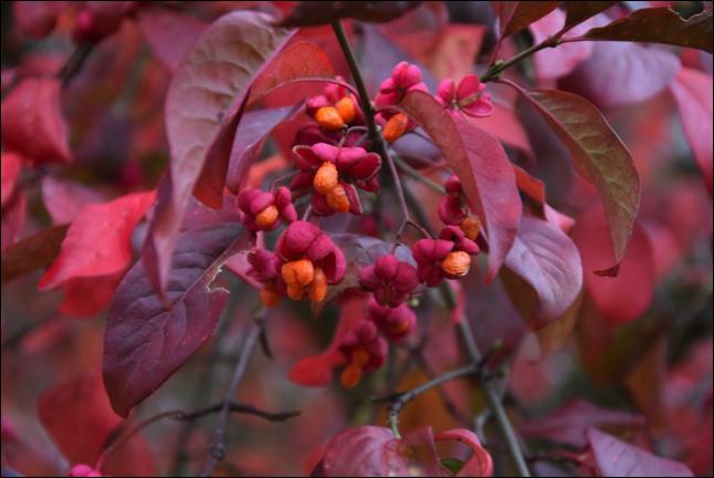 Autumn gardening 15