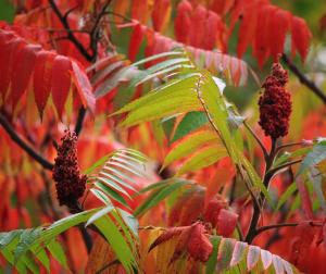 Autumn gardening main pic