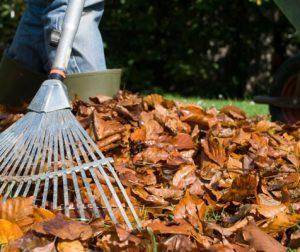 autumn-gardening-sweeping-leaves